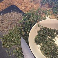 fresh garden herbs - getting ready to infuse oils, and also grind and put in soaps